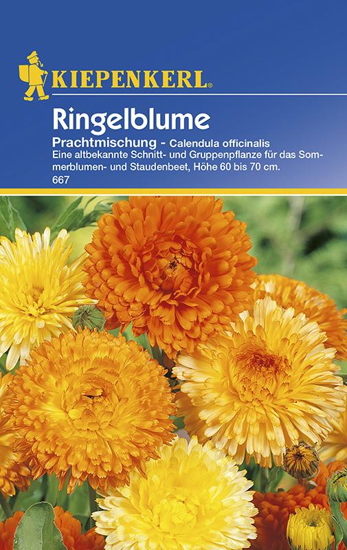 Ringelblume * Prachtmischung * Calendula Bauerngarten Kiepenkerl 667