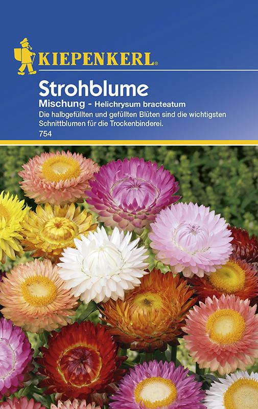 Strohblumen * Mischung * Helichrysum Bauerngarten Kiepenkerl 754