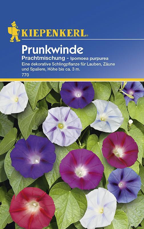 Winden Prunkwinde * Prachtmischung * Ipomoea purpurea Kiepenkerl 770