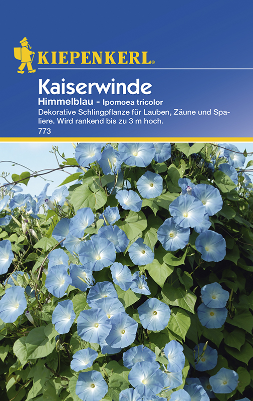 Winden Kaiserwinde * Himmelblau * Ipomoea tricolor Kiepenkerl 773