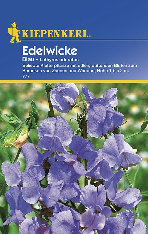 Wicken Duftwicken * Blau * Lathyrus odoratus Kiepenkerl 777