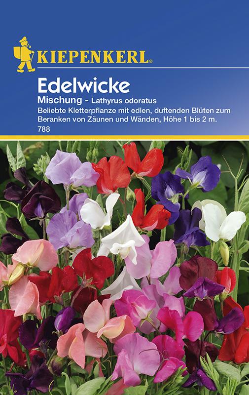 Wicken Duftwicken * Mischung * Lathyrus odoratus Kiepenkerl 788