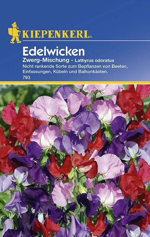 Wicken Duftwicken * Zwerg - Mischung * Lathyrus Kiepenkerl 793