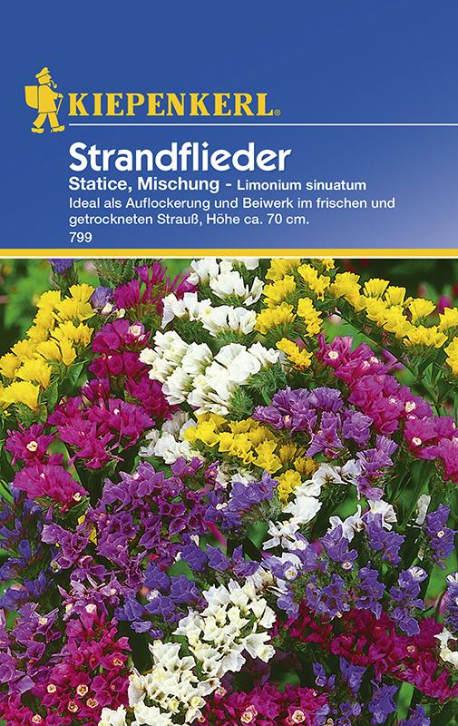 Strandflieder * Statice - Mischung * Limonium sinuatum Kiepenkerl 799