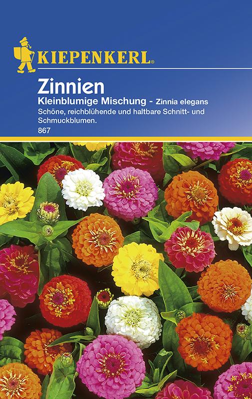 Zinnien * Kleinblumige Mischung * Zinnia Bauerngarten Kiepenkerl 867