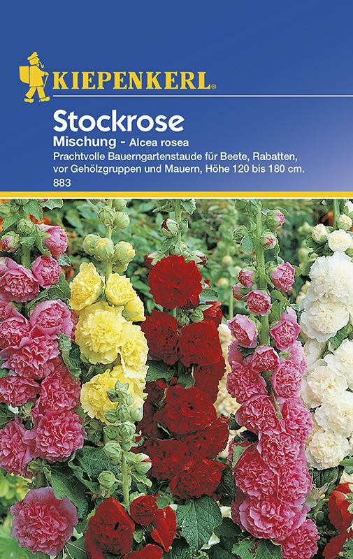 Stockrosen * Mischung * Alcea rosea Bauerngarten Kiepenkerl 883