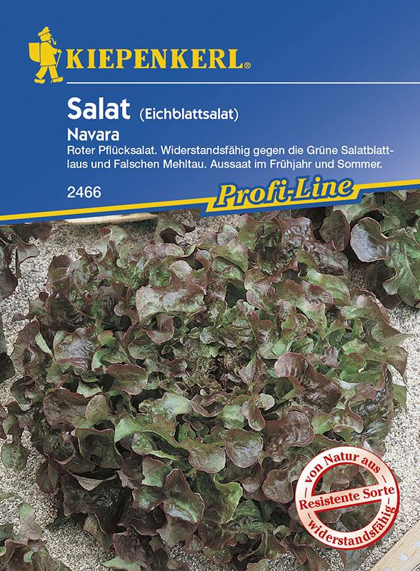 MHD 01//21 BIO-Saatgut Kiepenkerl 2490 Salat Pflücksalat rot Lollo Rossa