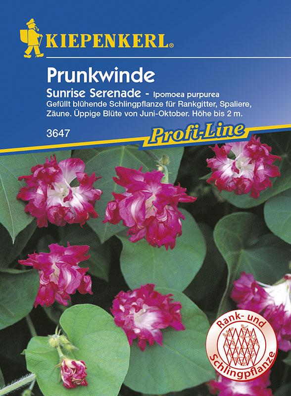 Winden Prunkwinde * Sunrise Serenade * Ipomoea Kiepenkerl 3647