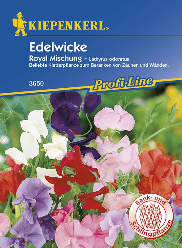 Wicken Duftwicken * Royal - Mischung * Lathyrus Kiepenkerl 3650